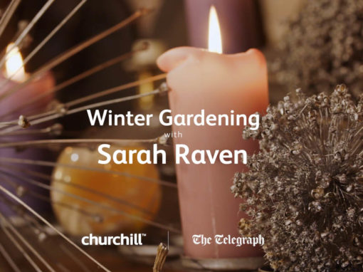 Churchill Insurance – Winter Gardening Tips